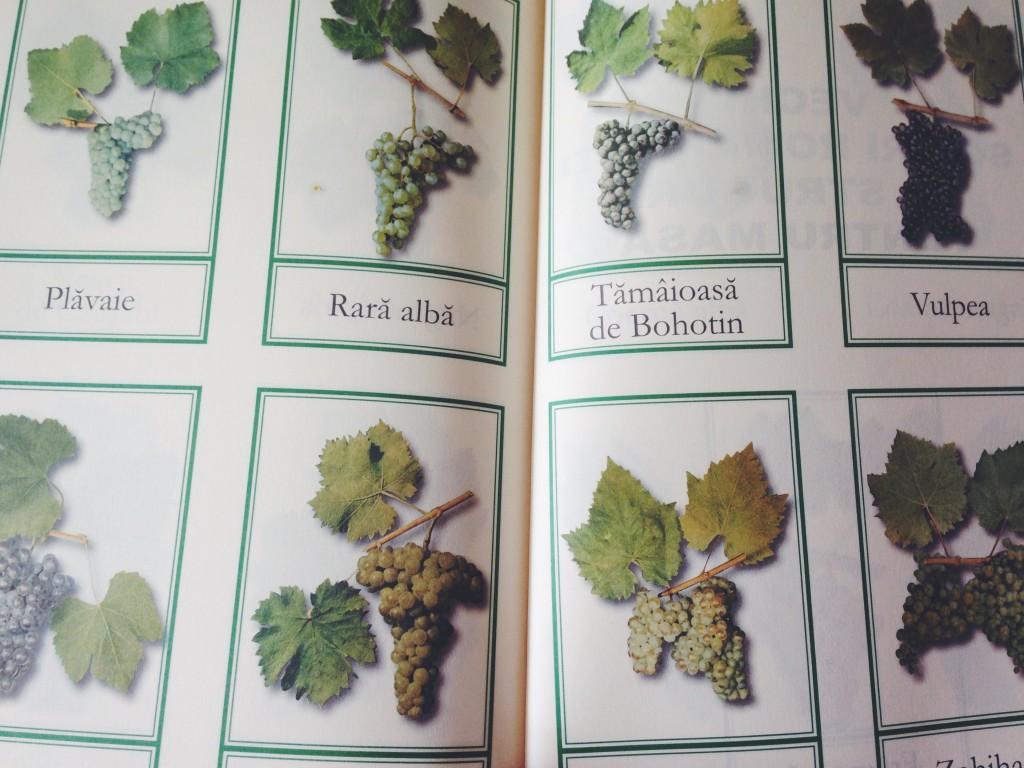 Roemeense wijnen